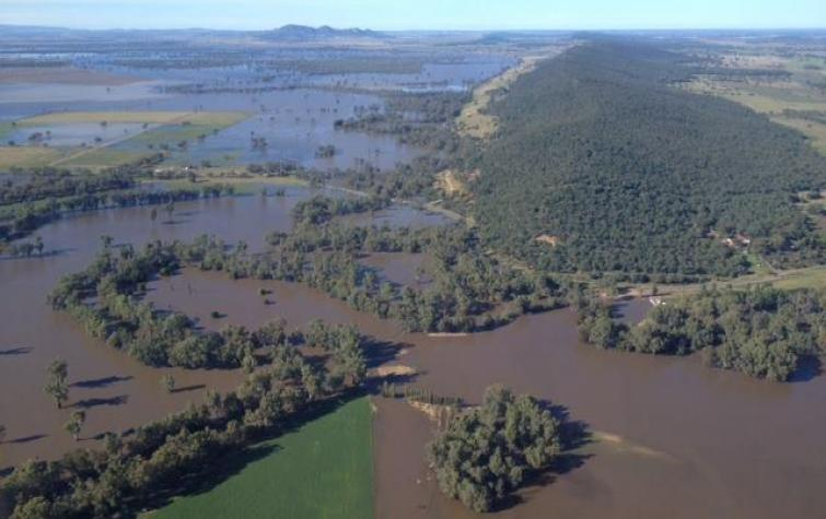 Aerial view of flooding in NSW. Photo: Alex Chesser