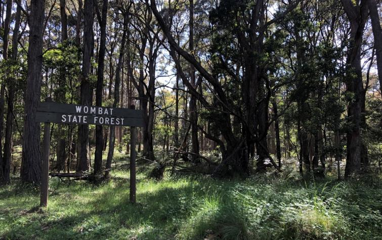 Prescribed burning in dry sclerophyll forest in Wombat State Forest, Victoria. Photo: Danica Parnell.