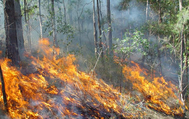 Fire spreading through understory in Queensland bushland. Photo: QRFS.