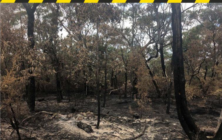 Range of residues (char and ash) remaining after prescribed burning in the Blue Mountains. Photo: Danica Parnell.