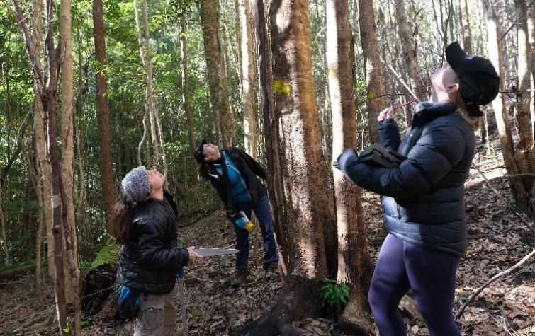 Students recording rainforest canopy scorch and trunk char height. Photo: Ross Peacock
