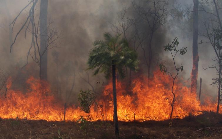A fire within tropical savanna bushland of northern Australia. Photo: Ken Scott.