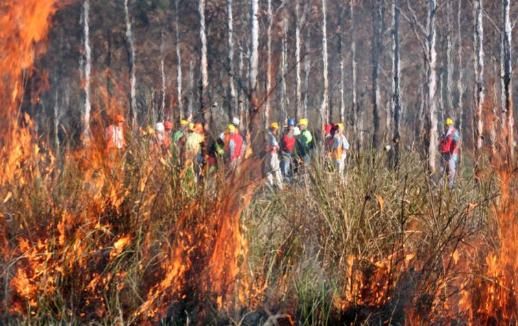 Prescribed burning in action. Photo: BNHCRC