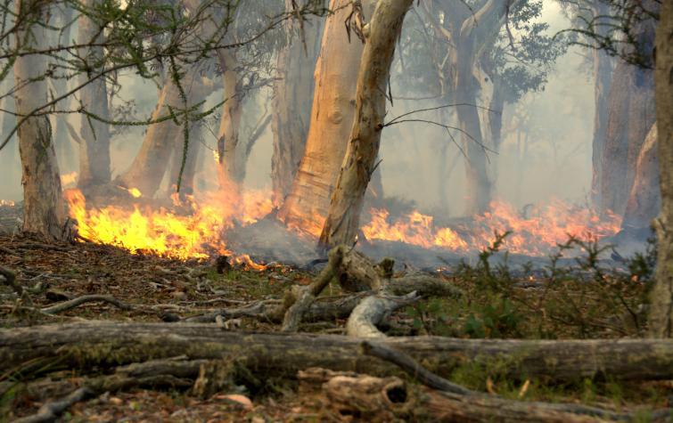 Low intensity hazard reduction burn. Photo: Marta Yebra.
