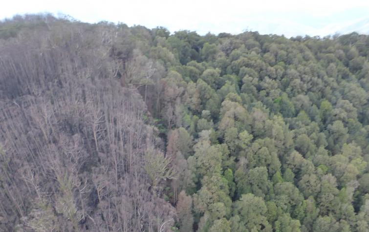 Burnt eucalyptus forest (left) and rainforest (right) showing sharp rainforest boundary. Photo: Piers Thomas, NSW NPWS.