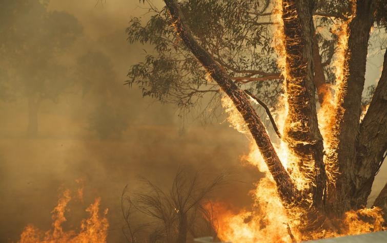 Photo of a fire during the 2016 Tasmanian bushfires.