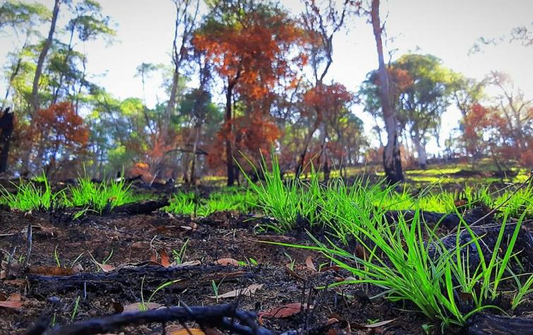 The Bushfire and Natural Hazards CRC are part of a new resilience program with Minderoo Foundation. Photo: Jake Philpott, CFA