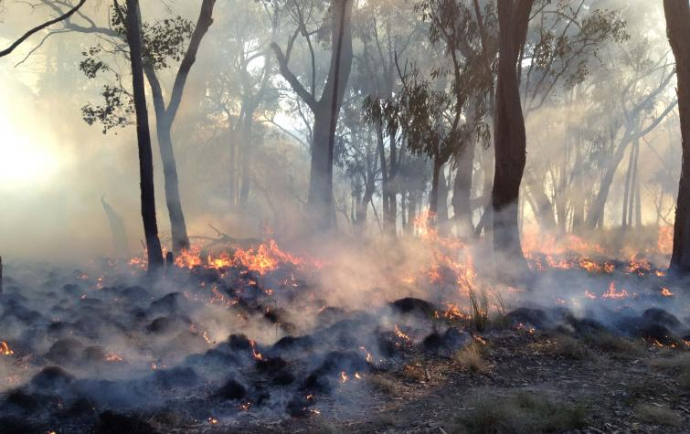 A prescribed burn in St Andrews, Victoria. Photo: Karin Reinke