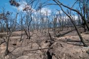 Fire and its impact on water, air and land will be the focus of the next Bushfire CRC Research To Drive Change online forum this Friday 29 August