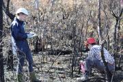 Measuring fuel loads in burnt plots.