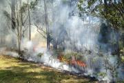 Prescribed burning underway. Photo Veronique Florec