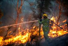 A firefighter battles the Parkerville fire. Photo by DFES