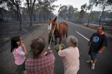 Managing animals during a hazard (Bendigo Advertiser)