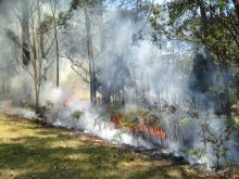 Prescribed burning underway. Photo Veronique Florec