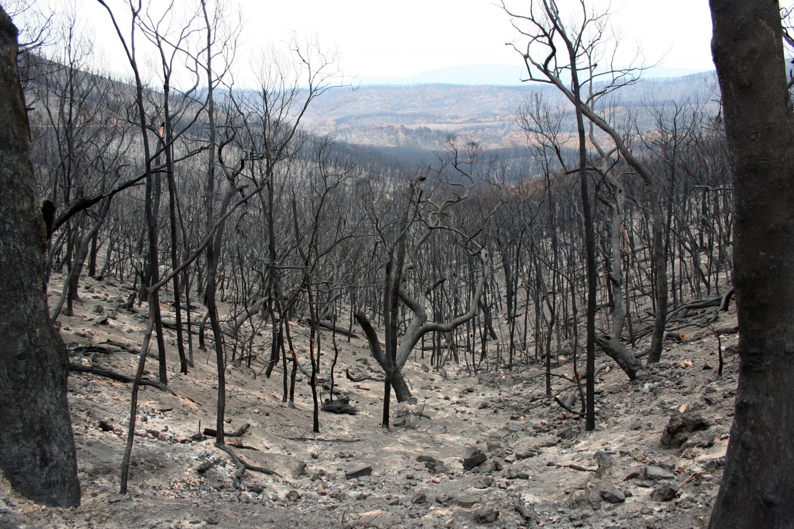 The Kinglake region after the Black Saturday bushfires in 2009