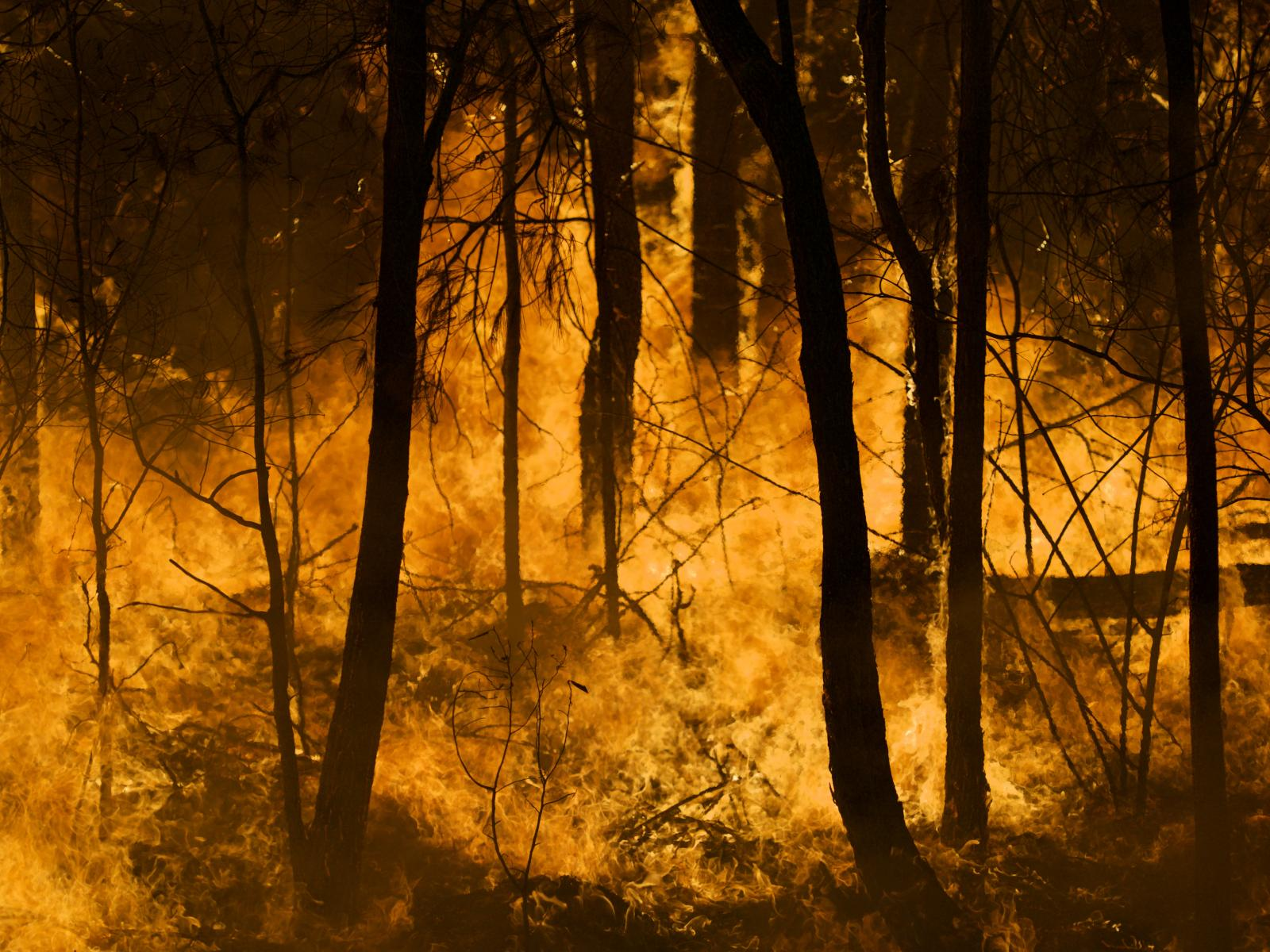 The latest edition of Fire Australia is now available. Photo: Mike Jansz.