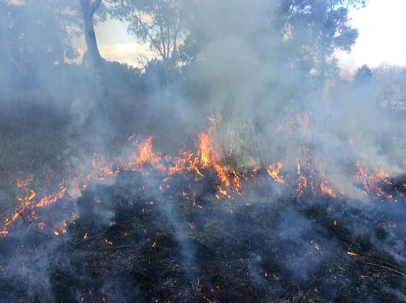 Spring 2015 prescribed burn. Photo: ACT Parks & Conservation Service