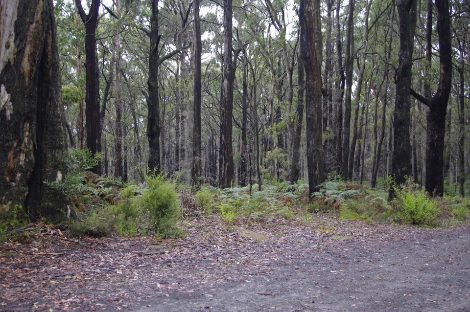 Forested landscape.