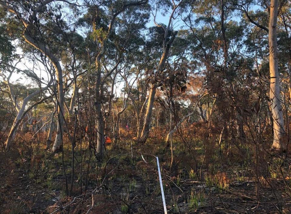 Sampling the effects of prescribed in forest in the Blue Mountains. Source: D Parnell