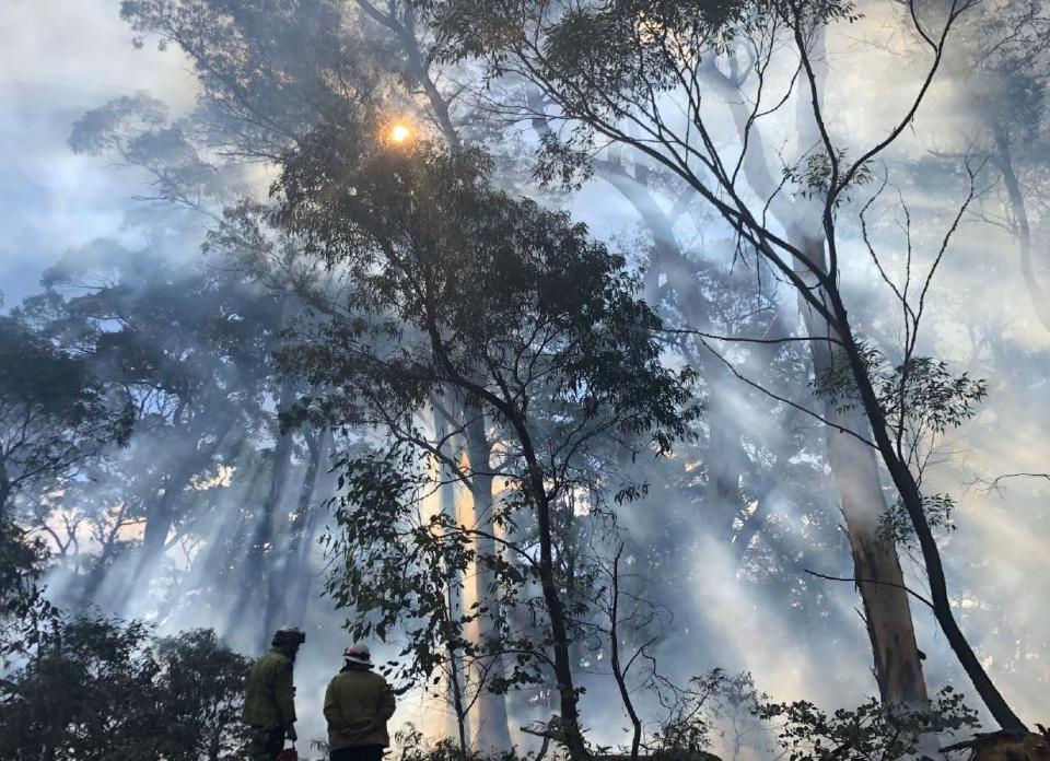 Prescribed burning at a field site sampled in 2019 in NSW. Photo: D. Parnell.