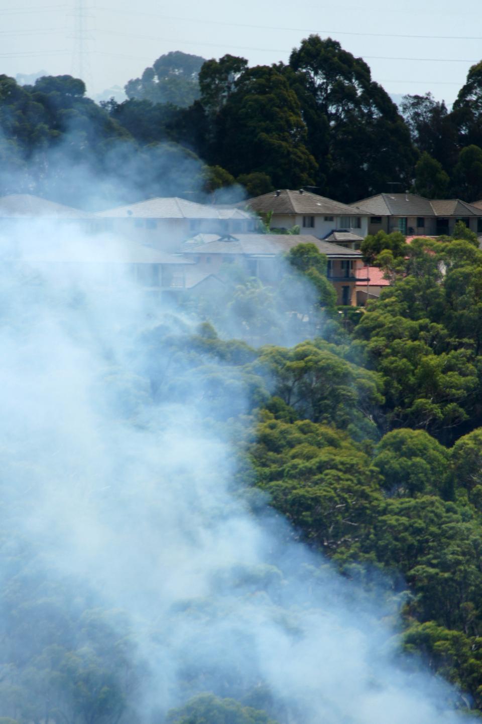 Belrose burn. Photo: Anthony Clark NSW RFS.