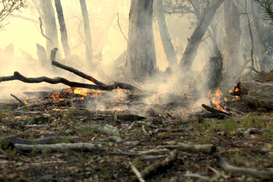 Remnants of an experimental burn. Photo: Marta Yebra.