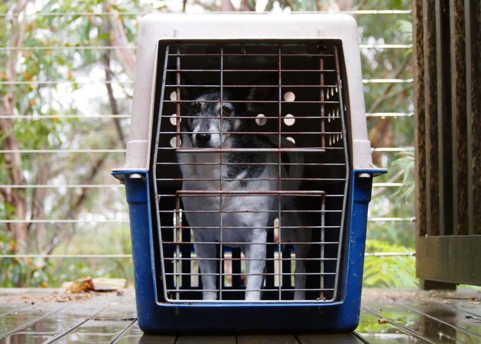 Giddy ready for evacuation. Photo: Jenny Bigelow