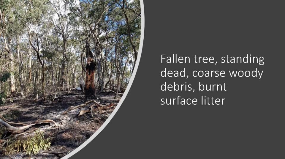 A field example of ecosystem components considered in modelling carbon accounting in response to a single prescribed burn. Photo: David Pepper.