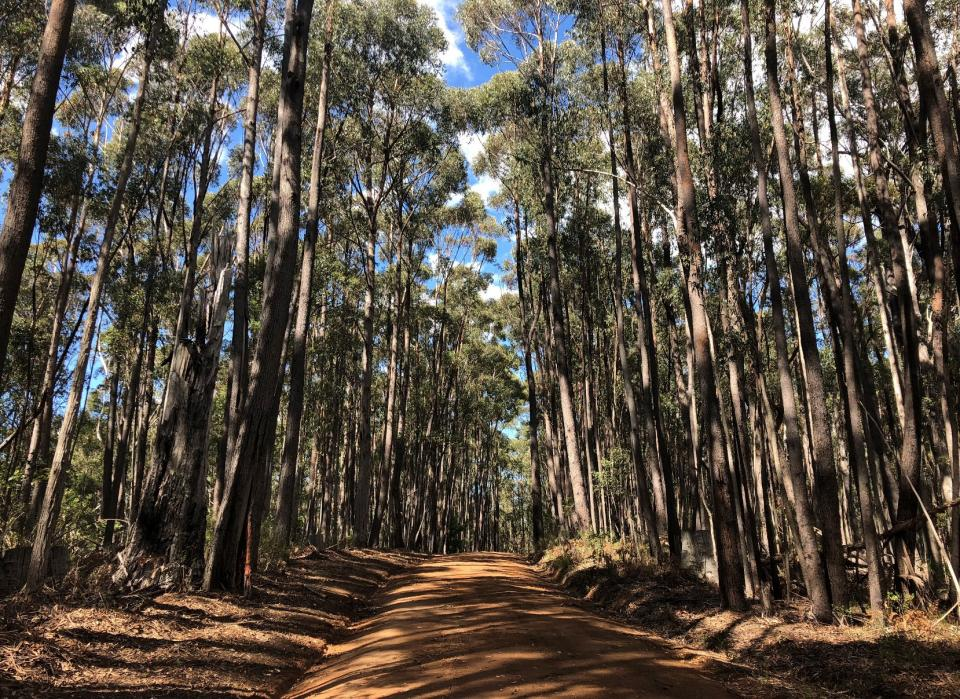 Approach to a field site in the Blue Mountains, NSW. Source: D Parnell.