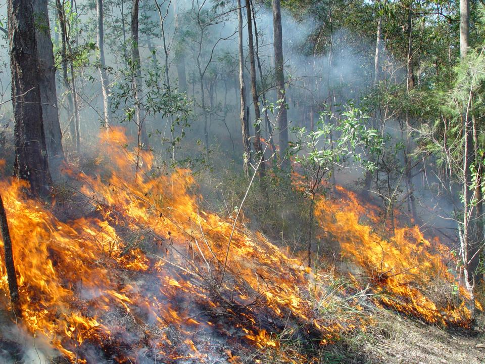Fire in the landscape. Photo: QFES.