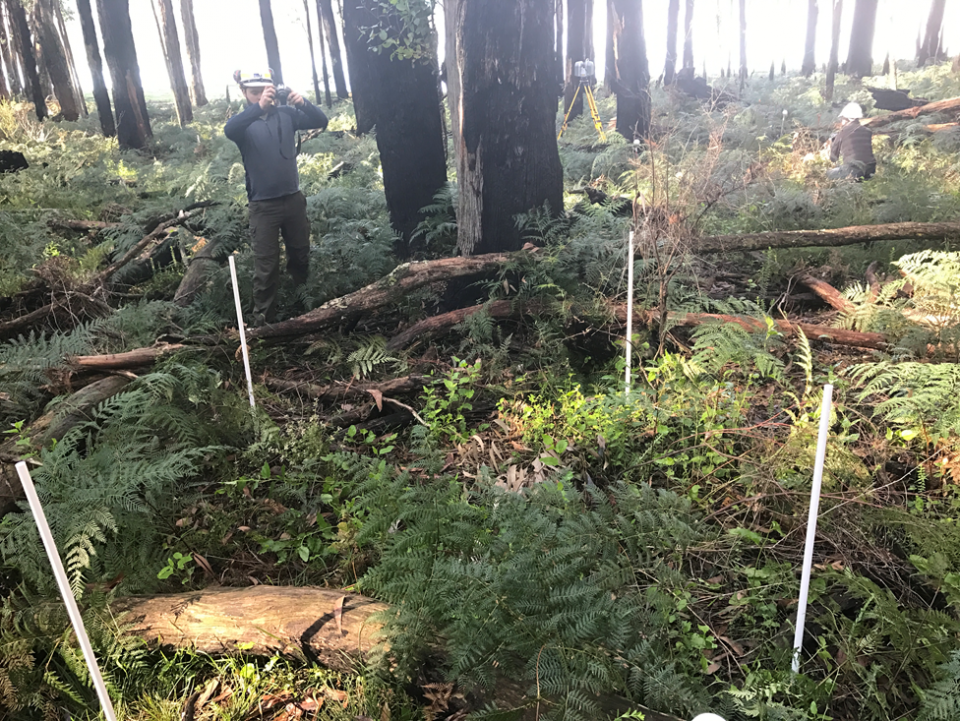 Data collection testing in closed lowland forests of Victoria. Photo: Karin Reinke.