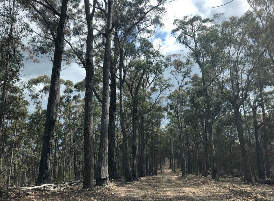 Fire trail allowing access to field sites in the Blue Mountains. Photo: Danica Parnell