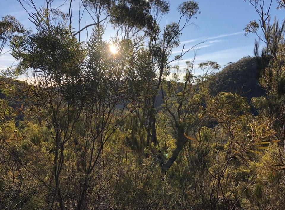 Typical vegetation in the Nattai National Park, New South Wales. Photo: Veronica Quintanilla-Berjon.
