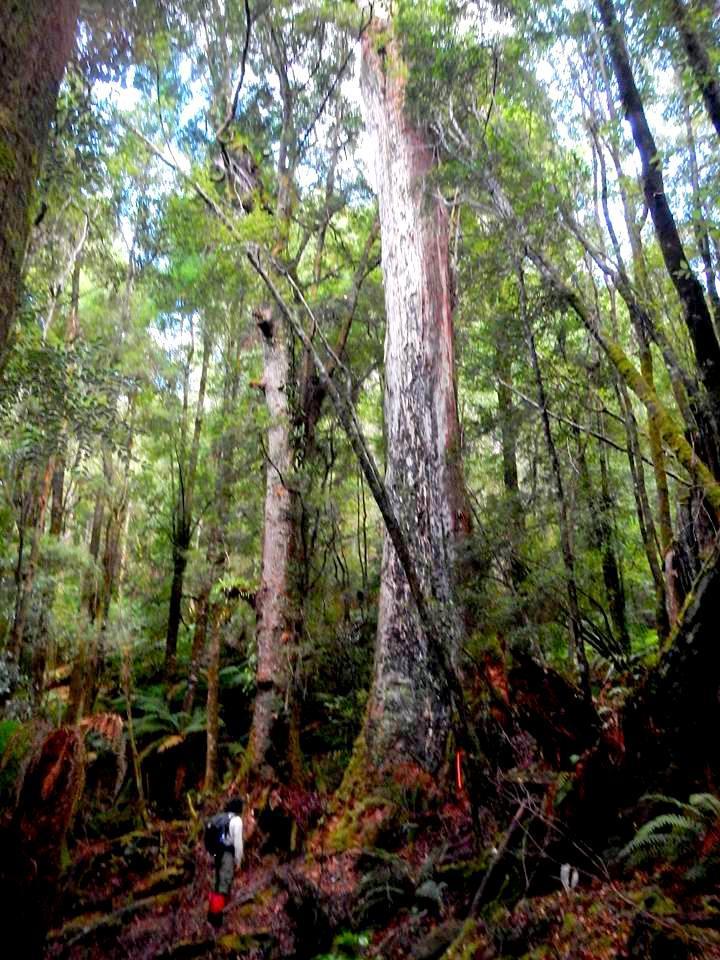 James collecting data in Tasmania. Photo: James Furland