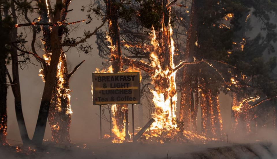 New research has begun that explores important issues arising from Australia's devastating 2019/20 Black Summer. Photo: NSW Rural Fire Service.