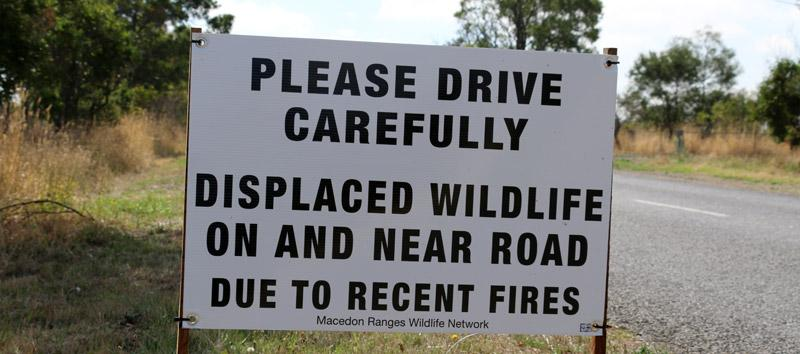 Animals displaced by a bushfire in Victoria 2014