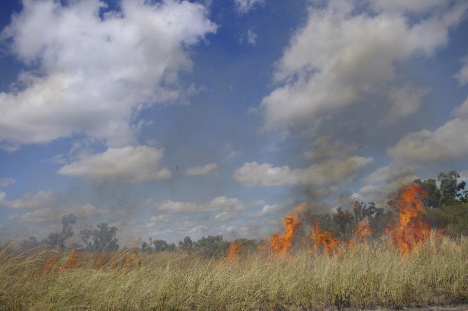 Prescribed burn of an area infested by Gamba grass near Darwin.