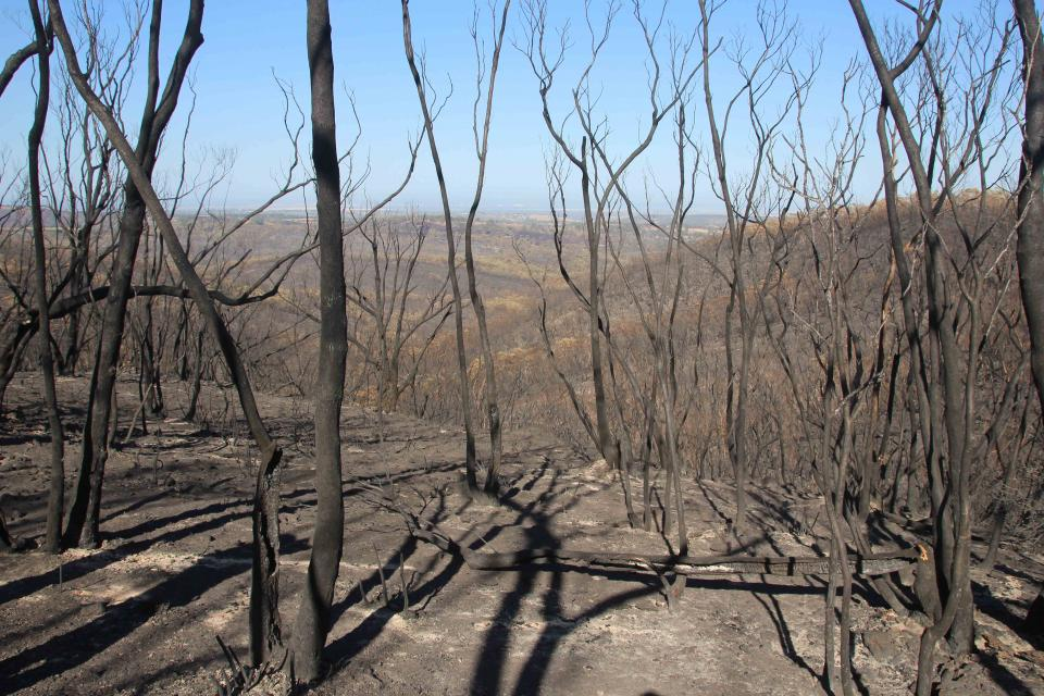 Adelaide Hills bushfire, January 2015. Photo: Chris Bastian, CFS