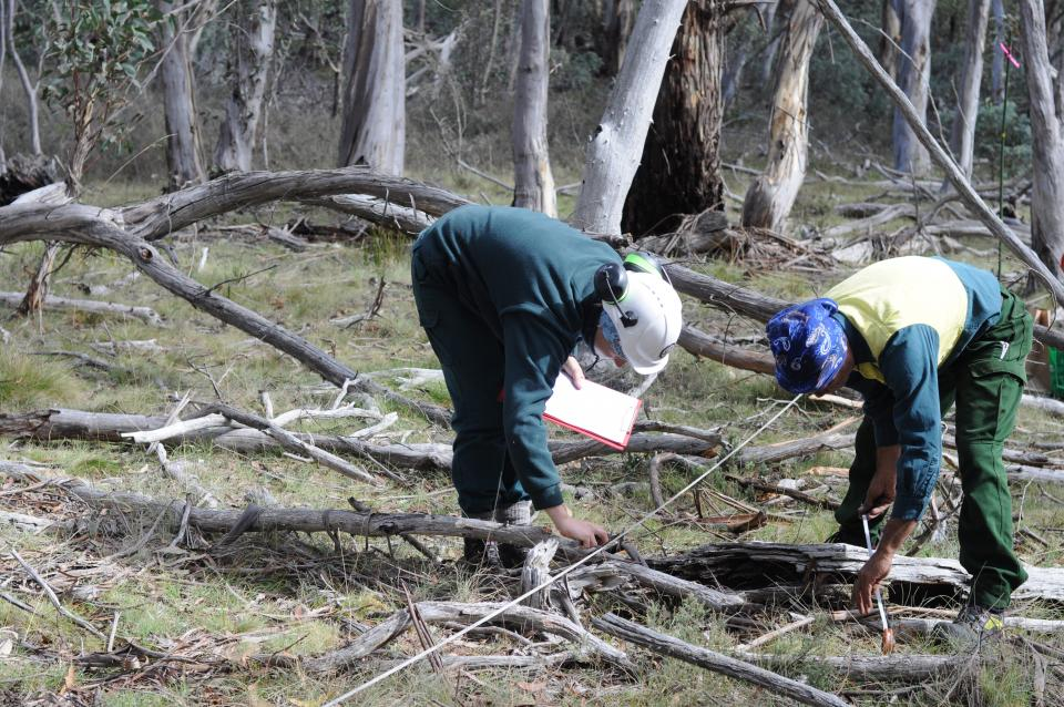 Bethany and Dean from ACT Parks and Conservation Service measuring coarse woody debris before the burn, in the Cotter Catchment, ACT.