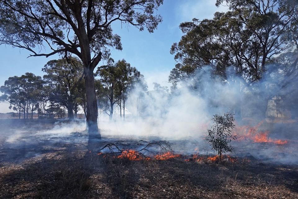 "Encouraging sign: a djandak wi (""healthy fire"") burn on Dja Dja Wurrung Country, Victoria, in April 2018. Photo: Timothy Neale"