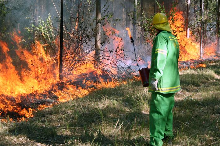 Prescribed burning in northern NSW