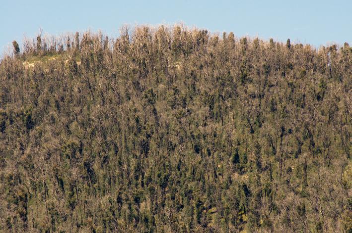 Lake Mountain landscape post Black Saturday fires