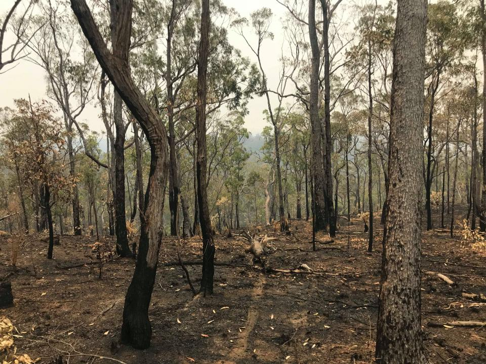 Post 2019 Banyabba bushfires. Photo: Lukas Gibb