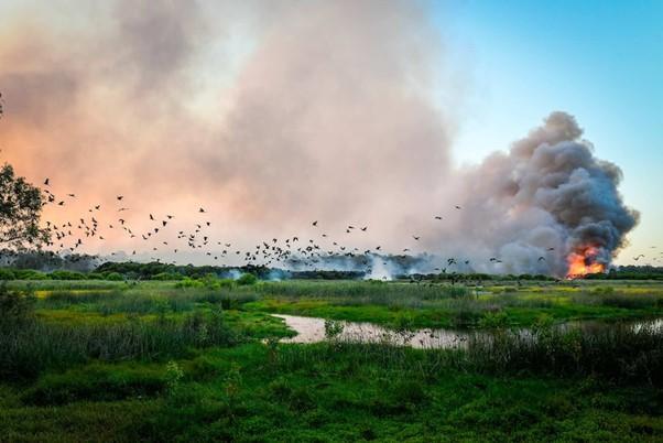 Yanchep National Park, 2019. Photo: Morten Boe, DFES WA