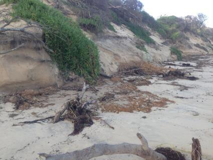 Eroding section of Old Bar Beach showing exposed rock at the foot of the dune.