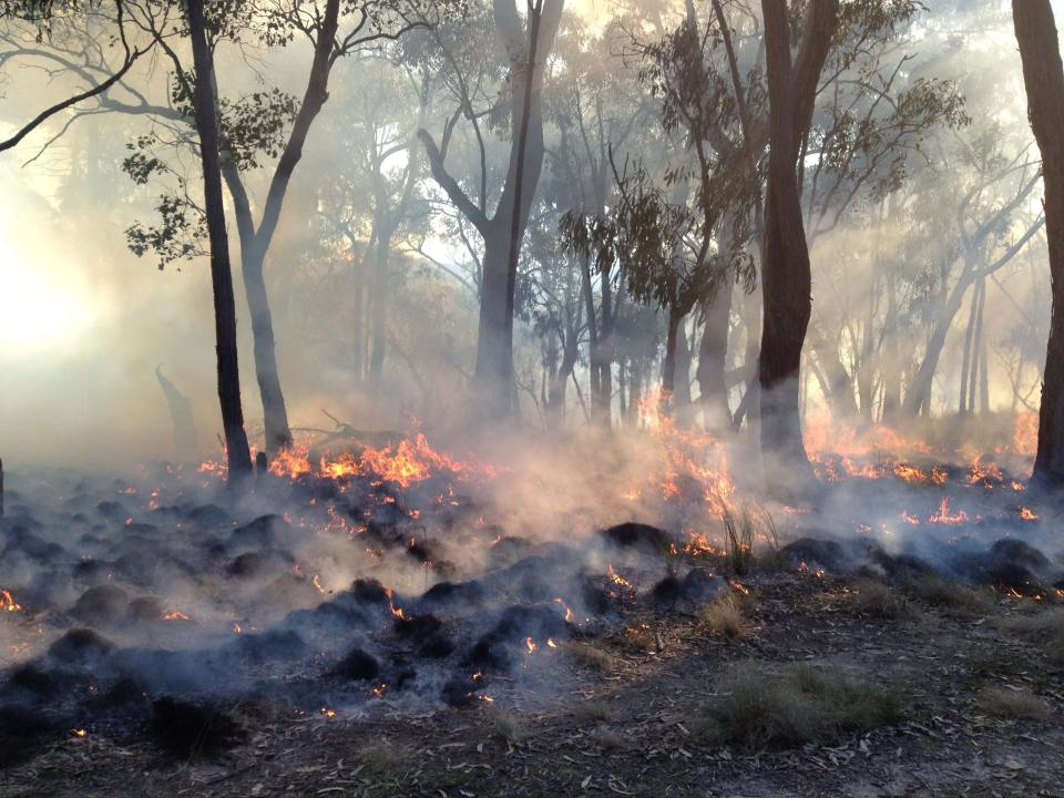 A prescribed burn in St Andrews, Victoria